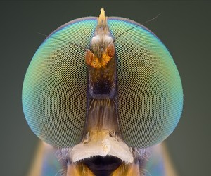 Macro photographs of insect eyes by Yudy Sauw.