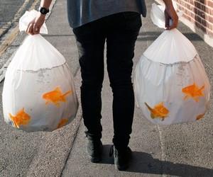 Goldfish Happy Sack Bin Bags