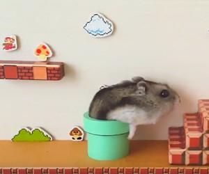 Hamster Super Mario Bros.