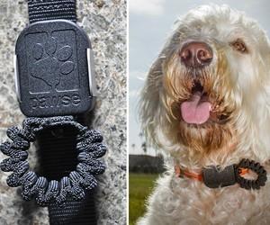 Pawse Automatic Dog Leash