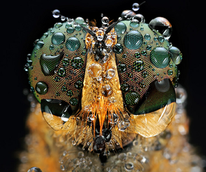 Gazing Into Giant Bug Eyes