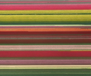 Colorful Tupid Fields by Simone Sbaraglia