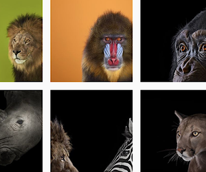 the perfect animal portraits by brad wilson