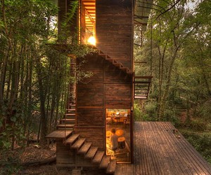 a tree house in the middle of a Mexican forest