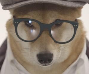Unleashed: Menswear Dog – A Portrait about Bodhi