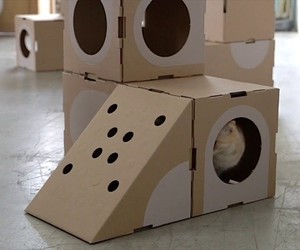 A Cat Thing: Modular scope for cats
