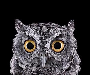 Owl Portraits by Brad Wilson