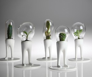 10 Creative Terrarium Designs